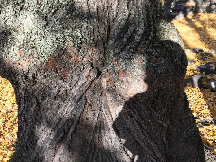 Tree Talks - Linden