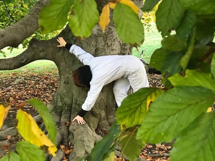 Tree Talks - Blodbøken